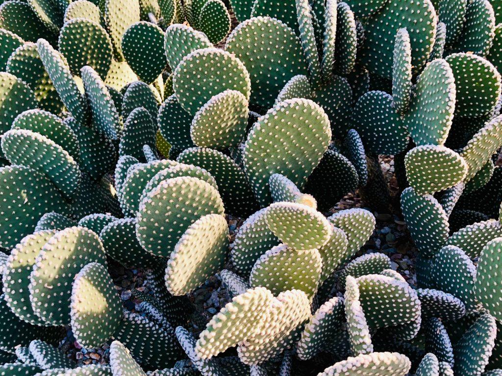 botanical gardens in the US desert botanical garden