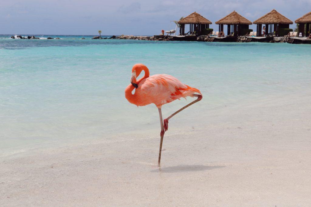 aruba travel guide flamingo beach